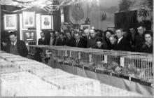 """1938 - Wystawa gołębi pocztowych hodowców-pracowników """"Szyby Jankowice"""" w Rybniku – (foto ze zbiorów kopalni/H. Konska)"""